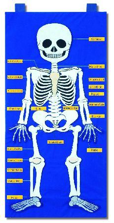 motessori-artikel-anatomie-puzzle